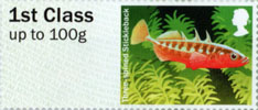 Post & Go: Ponds - Freshwater Life 1 1st Stamp (2013) Three-spined Stickleback
