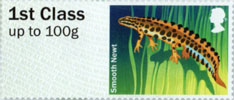 Post & Go: Ponds - Freshwater Life 1 1st Stamp (2013) Smooth Newt