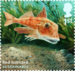 Sustainable Fish 1st Stamp (2014) Red Gurnard