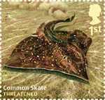 Sustainable Fish 1st Stamp (2014) Common Skate