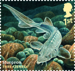 Sustainable Fish 1st Stamp (2014) Sturgeon