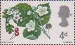 British Flora 4d Stamp (1967) Hawthorn and Bramble