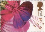 Greetings - Flowers 1st Stamp (1997) Fuschia Princess of Wales (Augusta Withers)