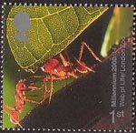 Millennium Projects (4th Series). 'Life and Earth' 1st Stamp (2000) South-American Leaf-cutter Ants (Web of Life Exhibition, London Zoo)