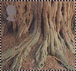 Millennium Projects (8th Series). 'Tree and Leaf' 2nd Stamp (2000) Tree Roots ('Yews for the Milennium Project')