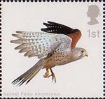 Birds of Prey 1st Stamp (2003) Kestrel with Wings folded