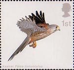 Birds of Prey 1st Stamp (2003) Kestrel with Wings horizontal