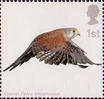 Birds of Prey 1st Stamp (2003) Kestrel with Wings partly extended downwards