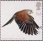 Birds of Prey 1st Stamp (2003) Kestrel with Wings fully extended downwards
