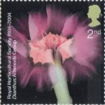 Bicentenary of the Royal Horticultural Society (1st issue) 2nd Stamp (2004) Dianthus Allwoodii Group