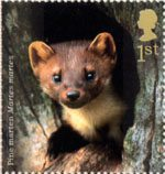 Woodland Animals 1st Stamp (2004) Pine Marten