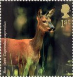 Woodland Animals 1st Stamp (2004) Roe Deer