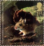 Woodland Animals 1st Stamp (2004) Yellow-necked Mouse