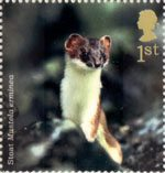 Woodland Animals 1st Stamp (2004) Stoat