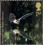 Woodland Animals 1st Stamp (2004) Natterer's Bat
