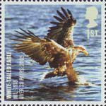 Birds 1st Stamp (2007) White Tailed Eagle