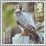 Birds 1st Stamp (2007) Peregrine