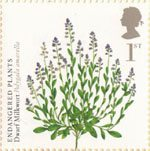 Endangered Plants and 250th Anniversary of Kew Gardens 1st Stamp (2009) Dwarf Milkwort