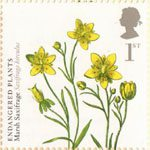 Endangered Plants and 250th Anniversary of Kew Gardens 1st Stamp (2009) Marsh Saxifrage