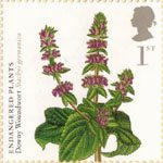 Plants - UK Species in Recovery 1st Stamp (2009) Downy Woundwort