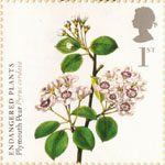 Endangered Plants and 250th Anniversary of Kew Gardens 1st Stamp (2009) Plymouth Pear
