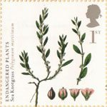 Endangered Plants and 250th Anniversary of Kew Gardens 1st Stamp (2009) Sea Knotgrass
