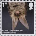 Mammals (Action for Species 4) 1st Stamp (2010) Brown Long-Eared Bat