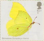Butterflies 1st Stamp (2013) Brimstone