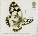 Butterflies 1st Stamp (2013) Marbled White
