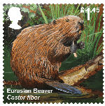 Reintroduced Species £1.45 Stamp (2018) Eurasian Beaver