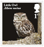 Owls 1st Stamp (2018) Little Owl