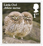 Owls 1st Stamp (2018) Little Owl, juvenile