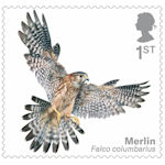 Birds of Prey 1st Stamp (2019) Merlin