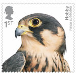 Birds of Prey 1st Stamp (2019) Hobby