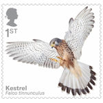 Birds of Prey 1st Stamp (2019) Kestrel