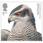 Birds of Prey 1st Stamp (2019) Goshawk