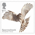 Birds of Prey 1st Stamp (2019) Sparrowhawk
