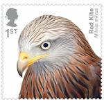 Birds of Prey 1st Stamp (2019) Red-Kite