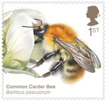 Brilliant Bugs 1st Stamp (2020) Common Carder Bee (Bombus pascuorum)