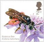 Bees 2nd Stamp (2015) Scabious Bee (Andrena hattorfiana)