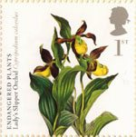Plants 1st Stamp (2009) Lady's Slipper Orchid