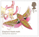 Brilliant Bugs £1.45 Stamp (2020) Elephant Hawk-Moth (Deilephila elpenor)